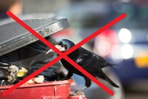 Tiere auf der Mülltonne
